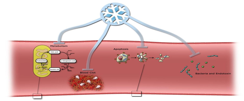 Illustration over hypotermis mulige kropspåvirkning ved sepsis (Foto: PERSIMUNE)