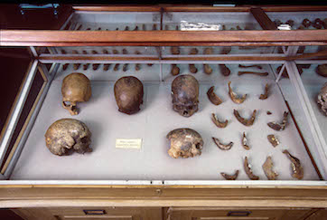 Skulls and other human remains from P.W. Lund's Collection from Lagoa Santa, Brazil. Kept in the Natural History Museum of Denmark. Credit: Natural History Museum of Denmark.