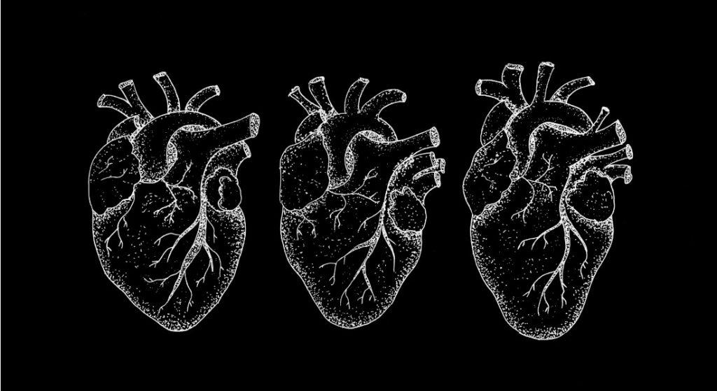 (Illustration af tre forskellige anatomiske hjerter. Foto: Københavns Universitet)