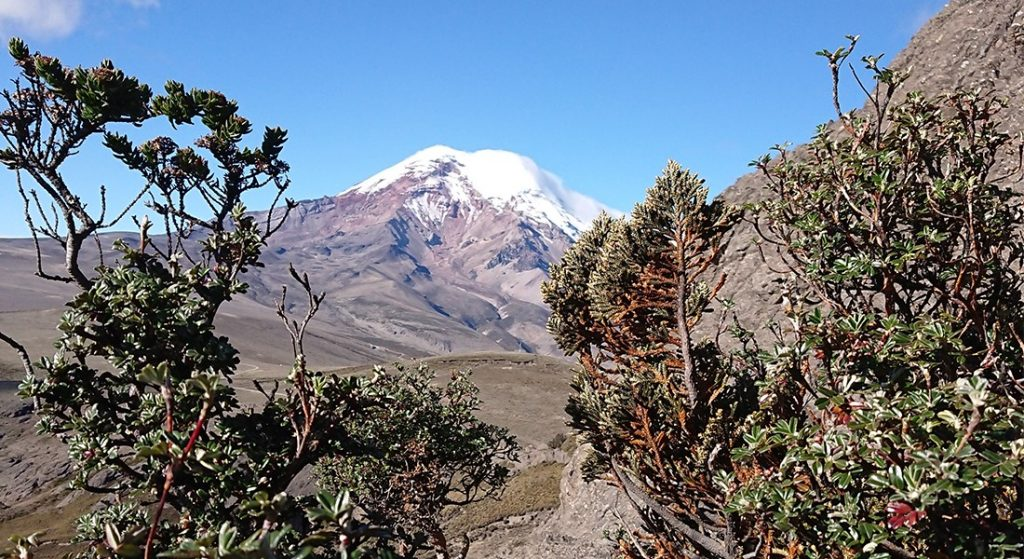 The volcano Chimborazo at the Andes in Ecuador. The volcano is especially known as the motive in Homboldts' famous drawing of the volcano's plant zones.