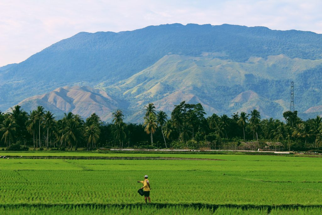 The picture shows a farmer in a rice field in the city of Aceh, Indonesia.