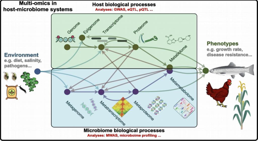 Figuren viser den komplekse biologiske proces, som man finder i vært og mikrobiom-systemer. Foto: Københavns Universitet.